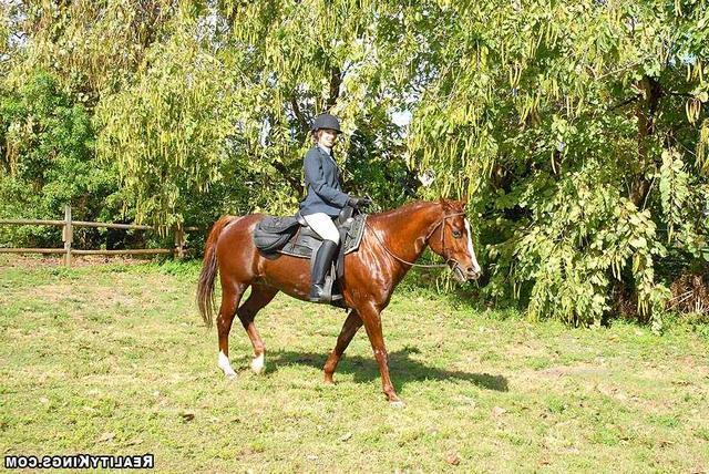 Лысый конюх и две наездницы